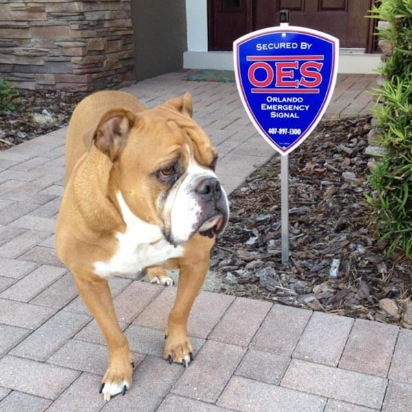 Great Bulldog Security Diagrams Thin Reznor F75 Rectangular Bulldog Security Products Bulldog Alarm System Young Dimarzio Dp Blue3 Pickup Les Paul Wiring Residential Alarm Systems